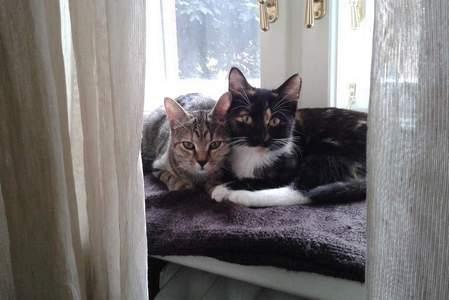 Kočky a kocouři