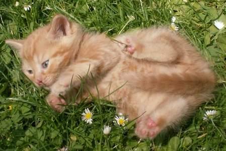 Koťata (do 1 roku)